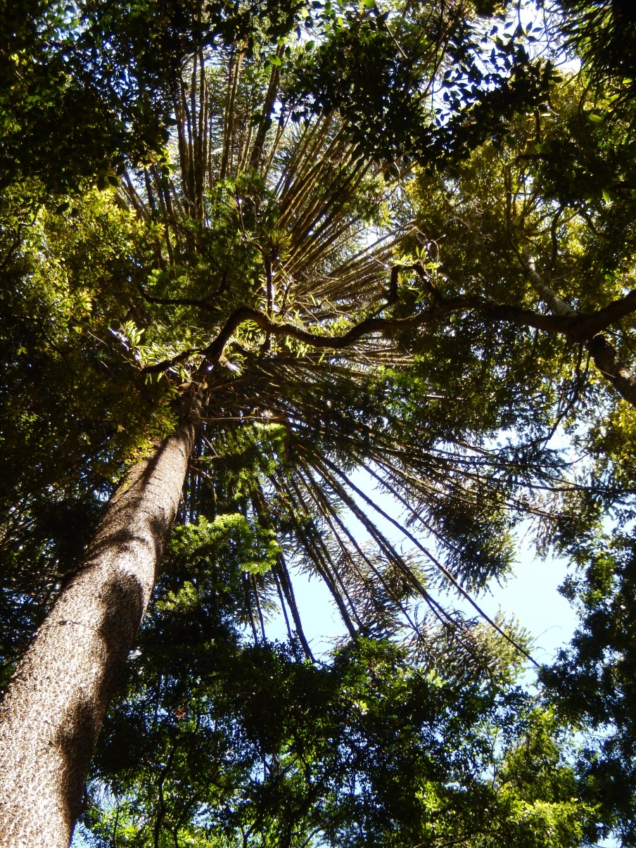 Bunya Mountains