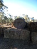 20160709 Kids playing on hay