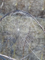 20160709 spider web early morning Cushnie LC