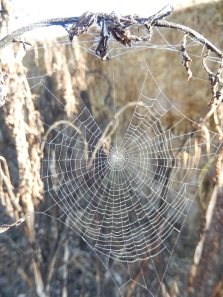 20160709 spiderweb early morning Cushnie LC