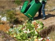 LC swales soil creation project -green waste