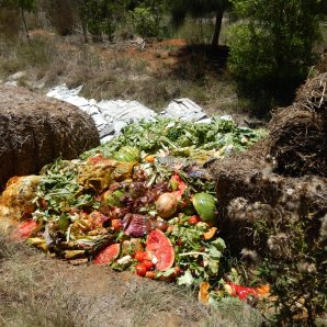 Food scraps are emptied in swales