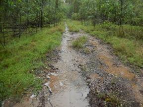Bush track during the rain