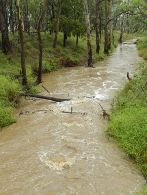 Gully creek in flood