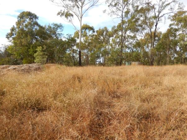 Before digging began top site