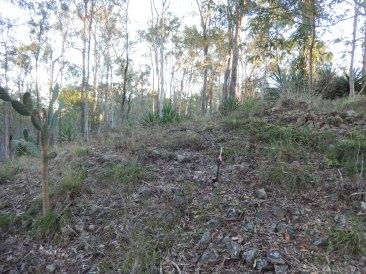 Ridge before terracing