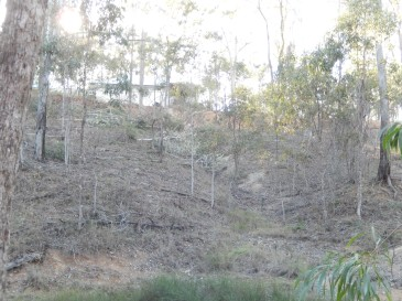 Gully line before terracing