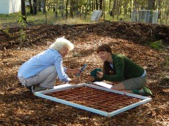 Participants observation activity hardwoodchip site