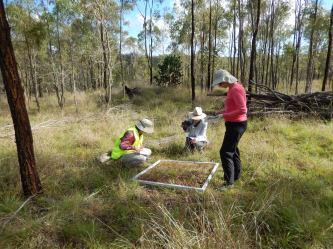 Participants observation activity grass site