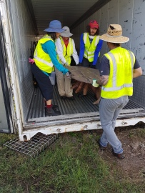 lugging team removes items from the containers before cleaning