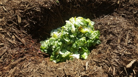 green waste in the holes to decompose, feed insects and create soil