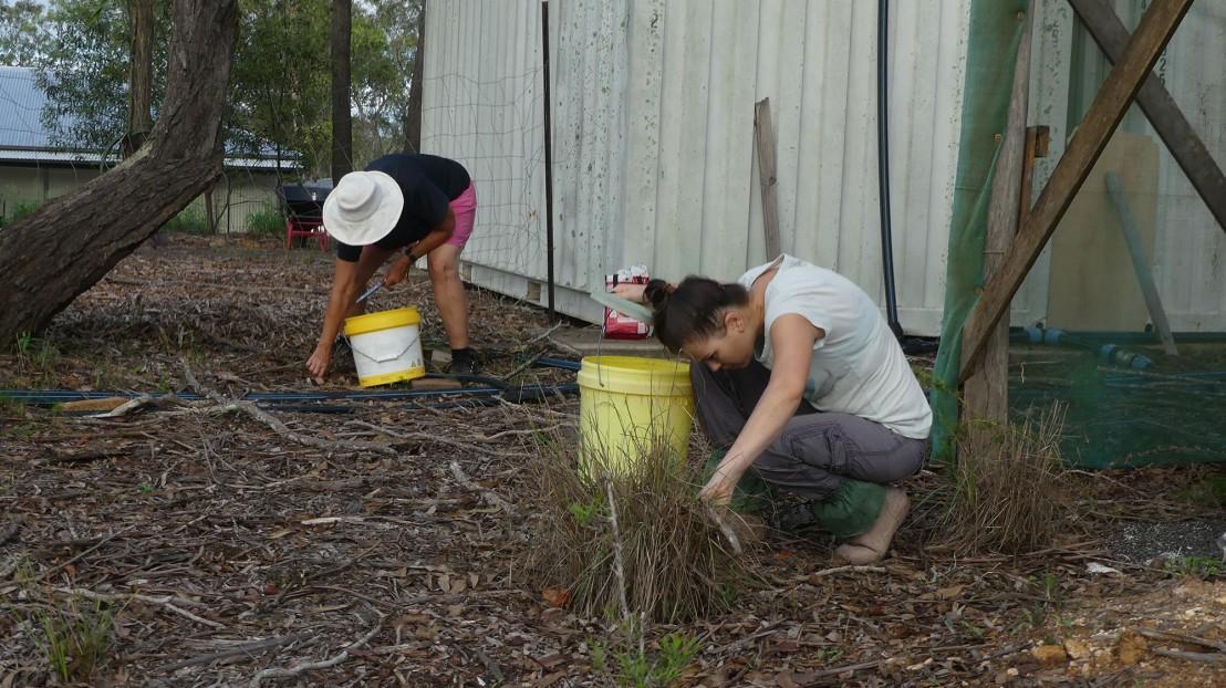 Volunteers weeding mother of millions