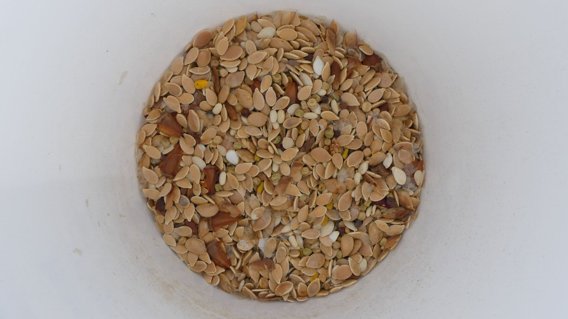 Larger size seed