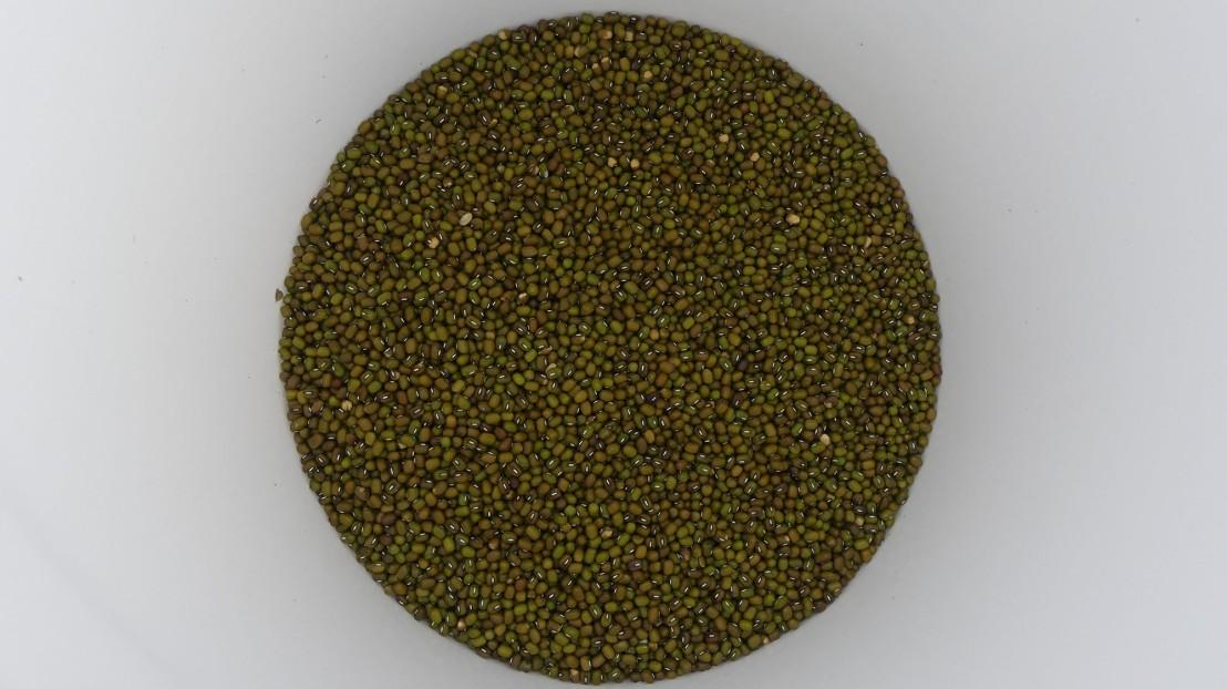 Medium size seed