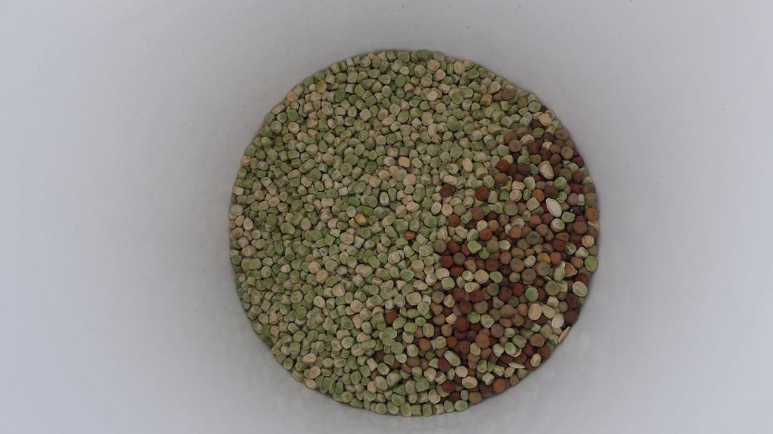Nitrogen fixing seed