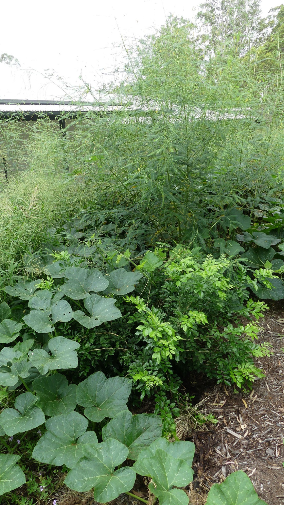 Garden flourishing after rain.