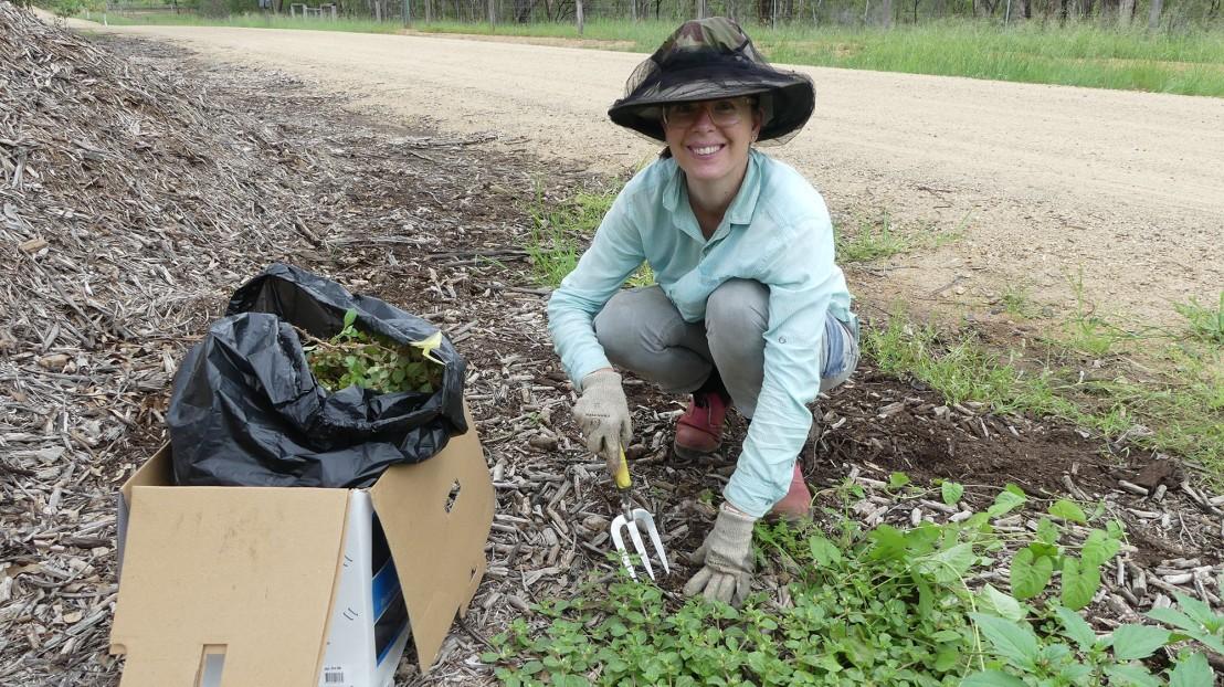 Rahni (volunteer) weeding invasive species after the rain