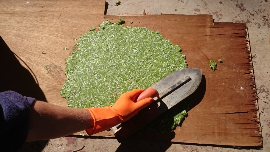 Trowelling cactus pulp and paper mix into a thin pizza