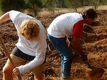 Digging holes for tree planting