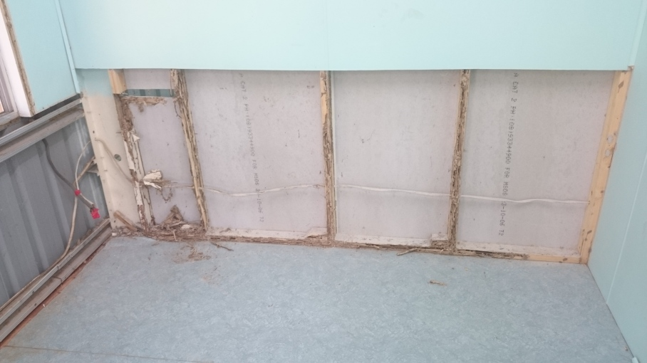 Termite damage inside wall