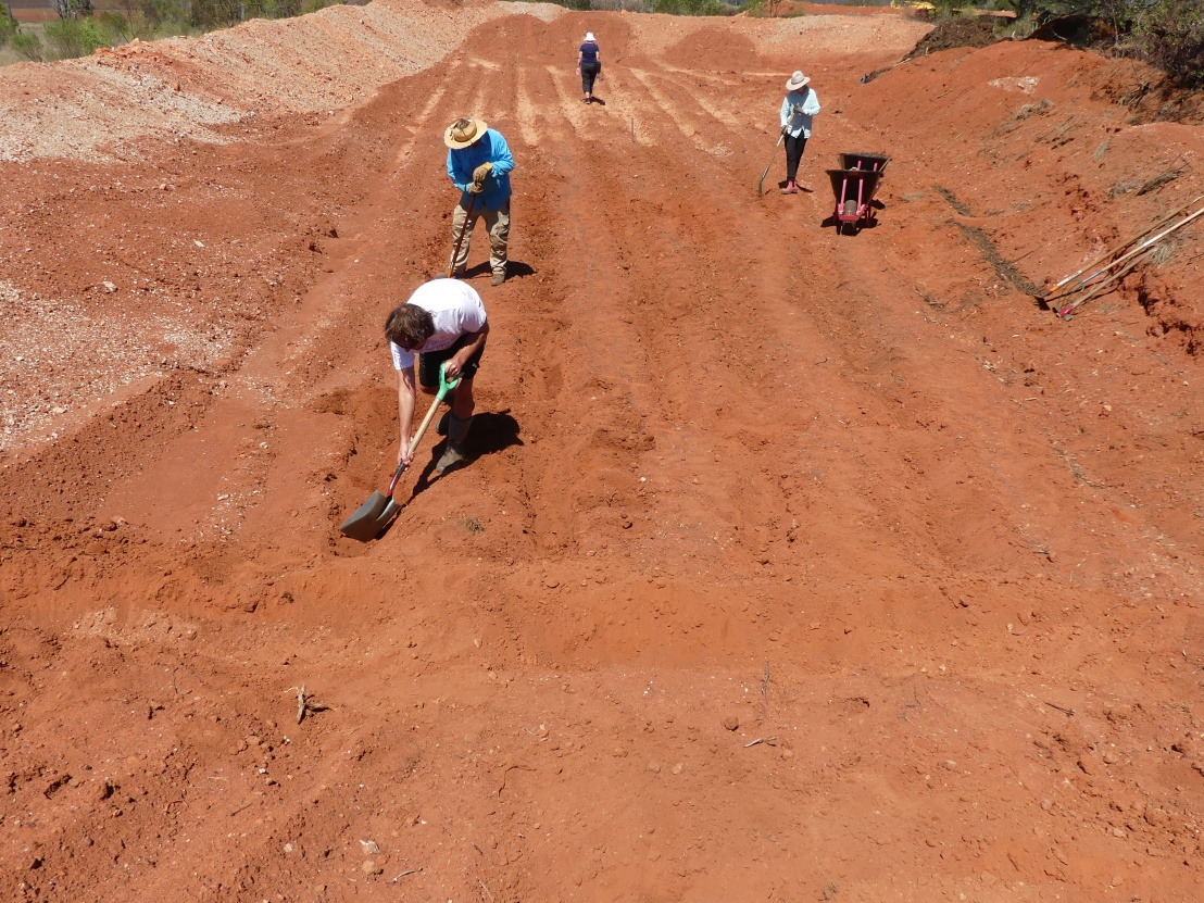 Volunteers loosen soil in the furrows
