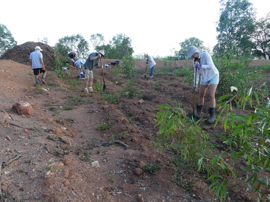 Volunteers loosen soil in the furrows