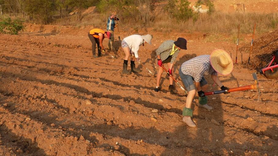 Volunteers loosen soil in terrace furrows