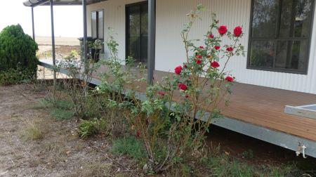 20200117-0935-4917--au4608cwr14243-rose bush-2000x1124px