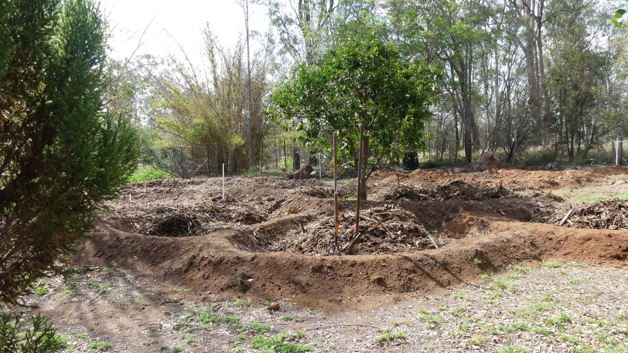 Fertility pits for seeding/planting have been created around existing trees