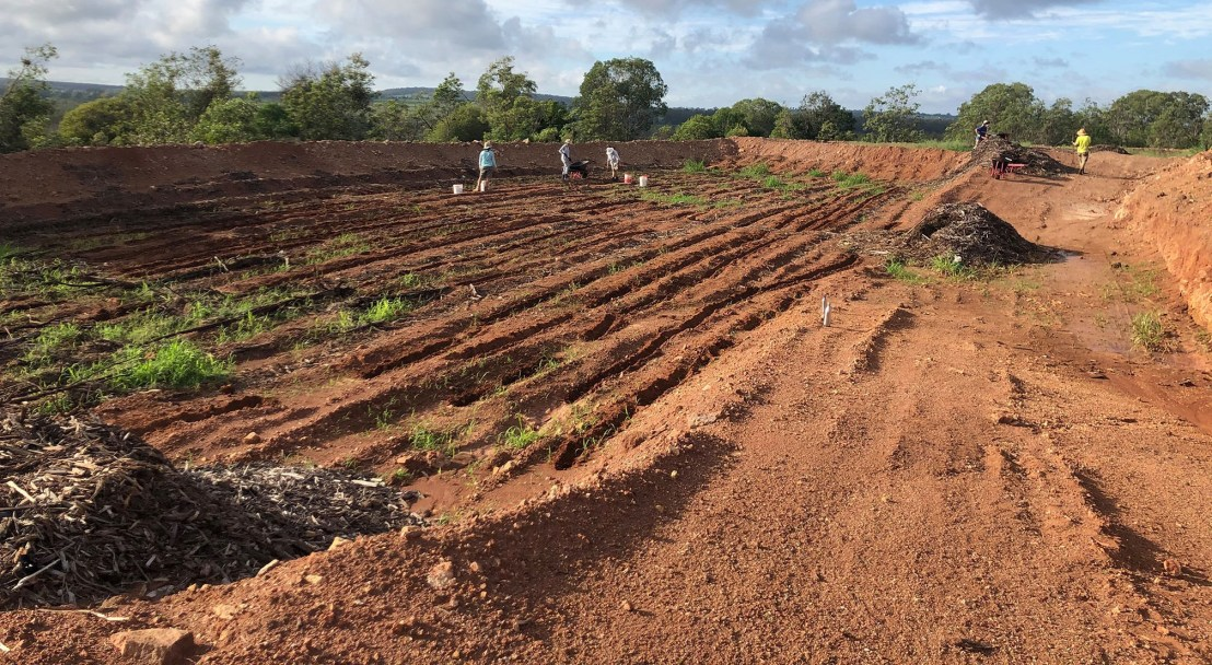 Seed has soil contact and mulch is placed between the rows of seed (not over the seed) with the intention to hold moisture where the plants can still benefit from, but not suppress sprouting, 20 February 2020.