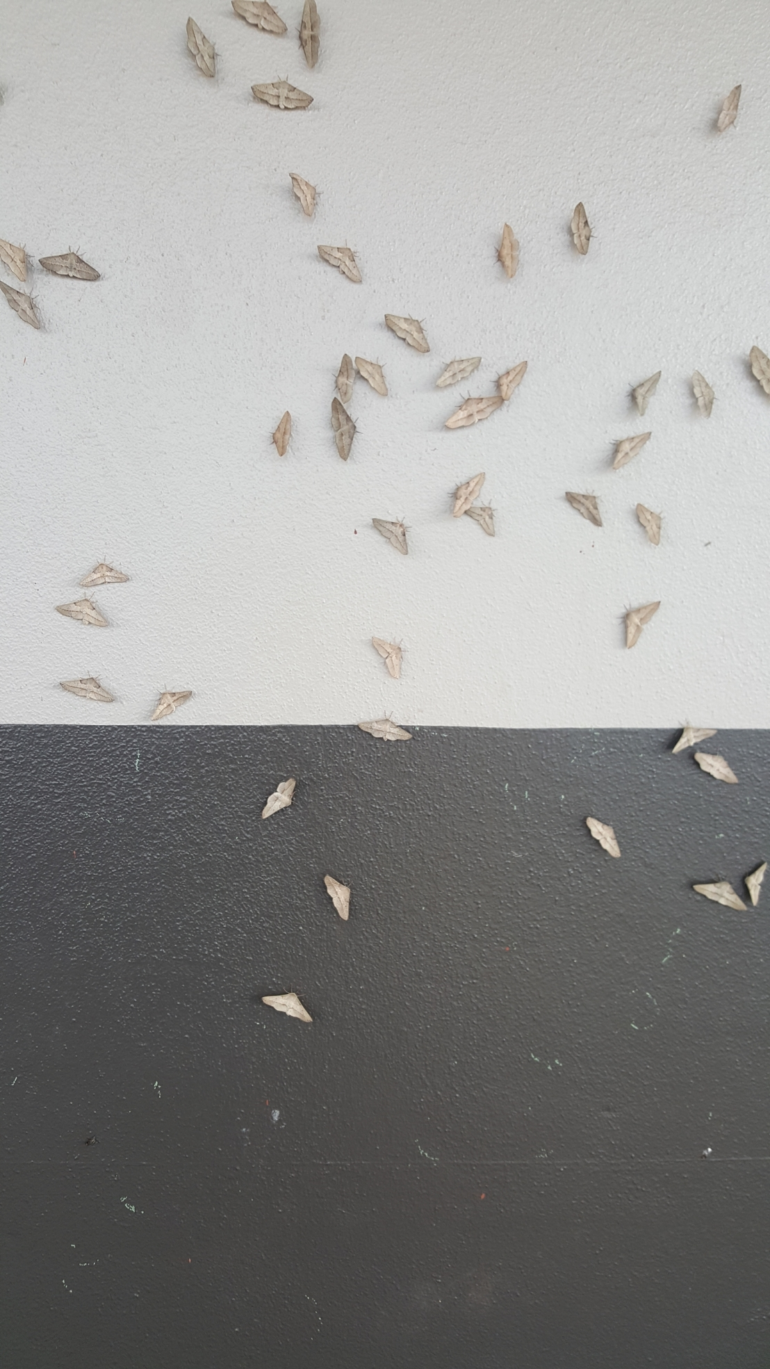 Moths on wall.