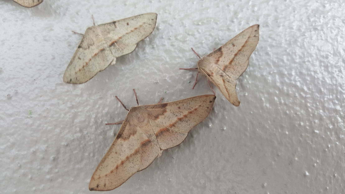 Close-up of moths.