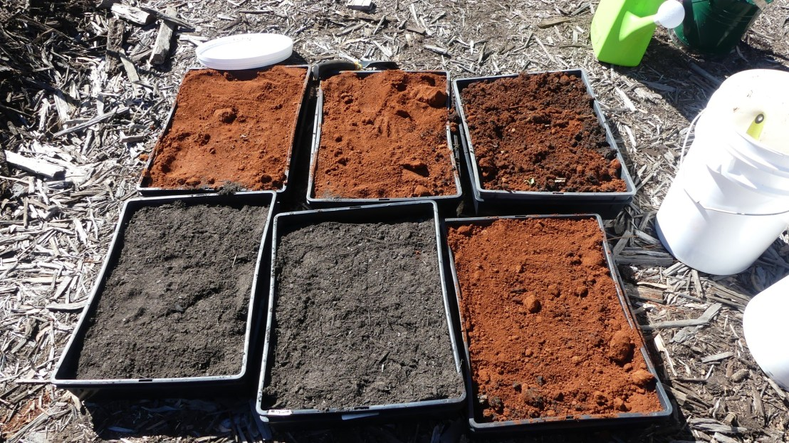 Seed germination experiment, soil comparisons, May 2020.