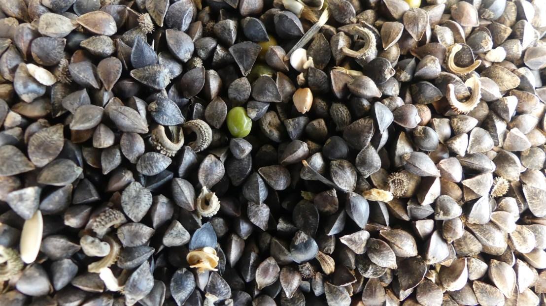 A variety of seed, May 2020.