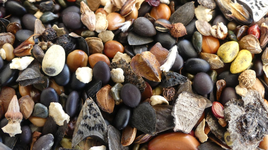 A variety of seed for Environmental Projects, May 2020.