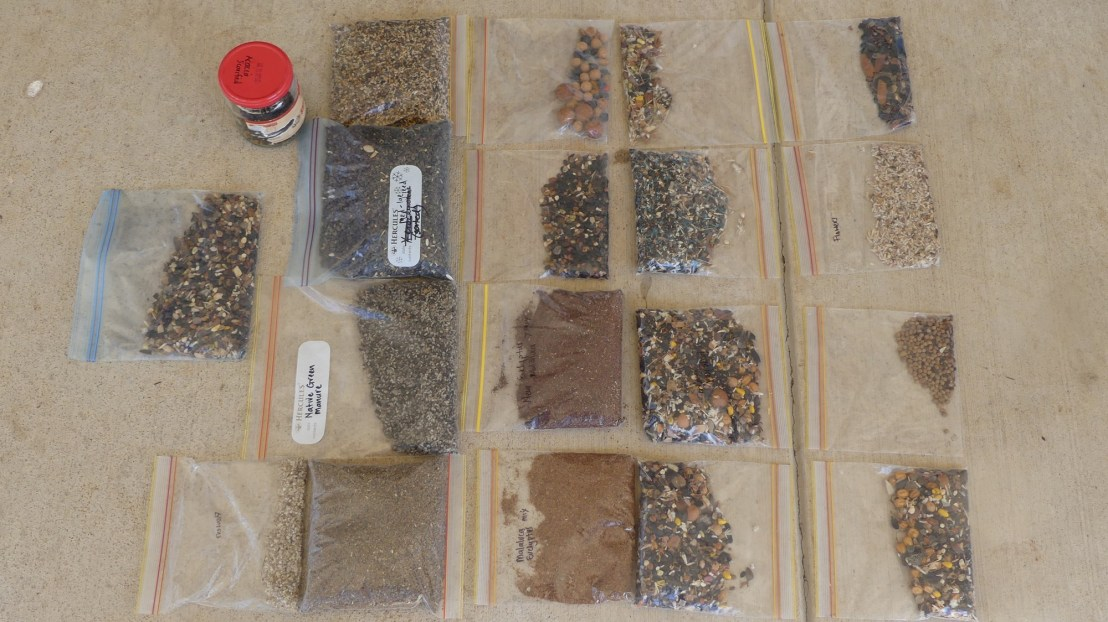 Seed sorted & ready to plant, May 2020.