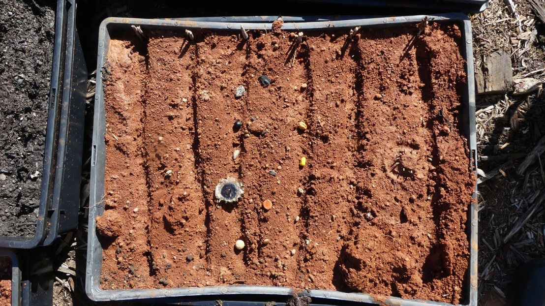 Seed germination experiment, soil from terraces with a variety of seeds, May 2020.