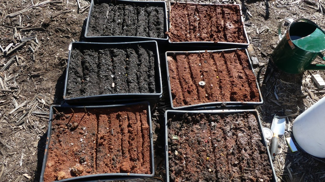 Seed germination experiment, seeds sown, May 2020.