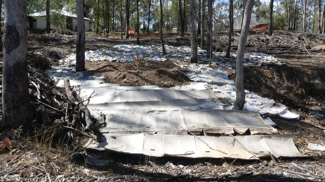 Cardboard is layered over the ground to suppress regrowth of invasive species, August 2020.
