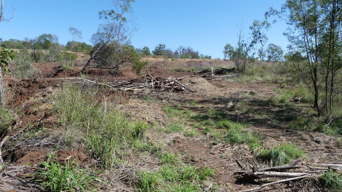 Gully line after rain, October 2020.