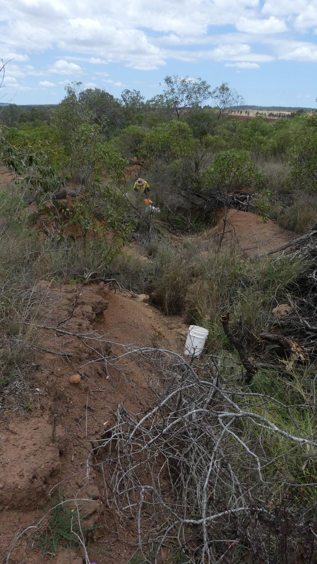 Lantana removed from eroded gully, November 2020.
