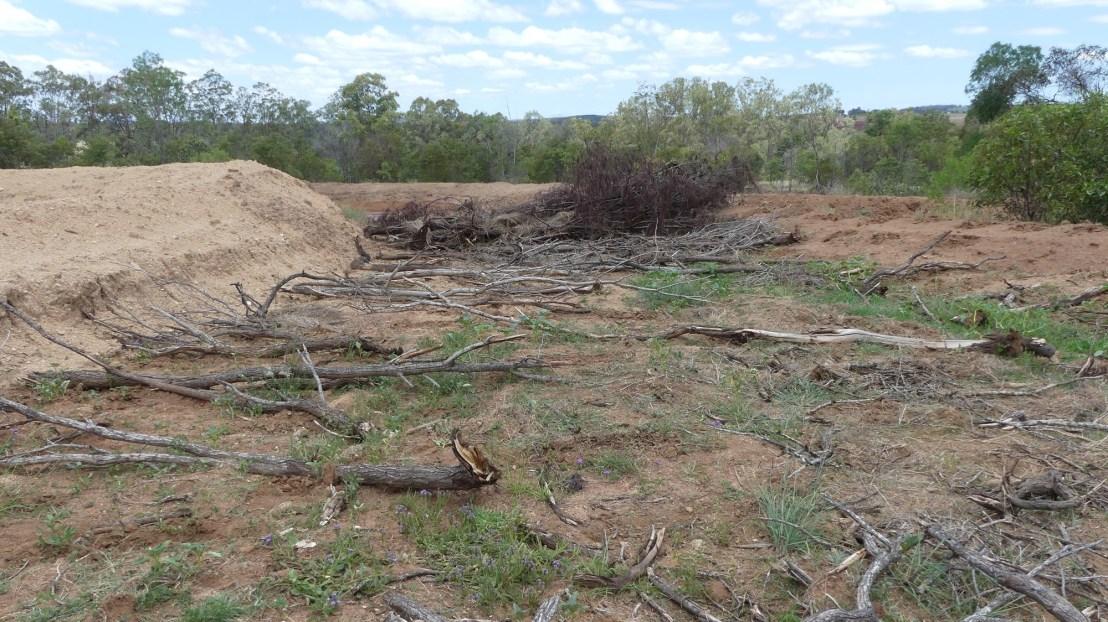 Logs across slope to slow down erosian, November 2020.